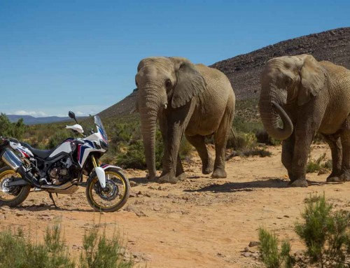 Africa Twin CRF 1000L—————————————-